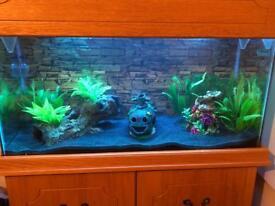 Axolotls with tank (broken) and full set up