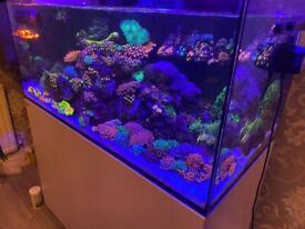 Red Sea 425 tank