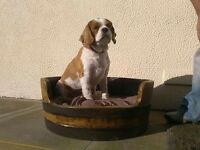 Whisky Barrel Dog Bed