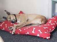 Female lurcher