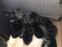 Kittens ready for new home