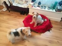 Chris & Jo's reliable, kind & affordable dog walking and pet care in Chessington, Epsom and Ewell.