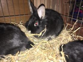 Bunny's in need of a good home ASAP