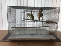 Green budgie & cage for sale