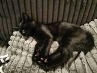 Loving kitten