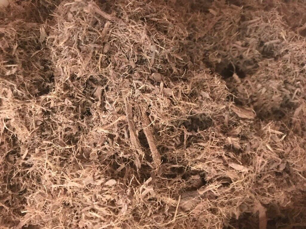 Buy Mimosa Hostilis Root Bark [canariasdeportiva]