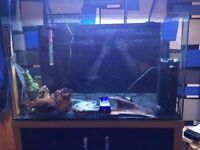 120 litre fish tank with stand filter, pump, heater and accessories