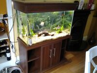 Tropical fresh water fish with tank aquarium