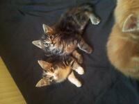 3 kittens ready for there new homes