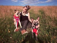 Dog Walker & Pet Sitter available any day / night of the week! In Kemptown, Brighton.