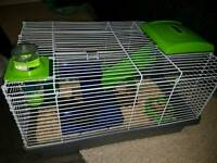 1 year old hamster and cage