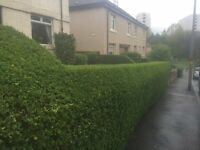 DO IT ALL..garden maintenance,Tidy Ups,North/South Lanarkshire,we remove all waste at job completion