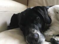 Poochcanna offers dog walking and dog boarding