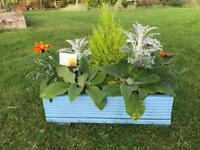 Baby blue planter with hardy perennials