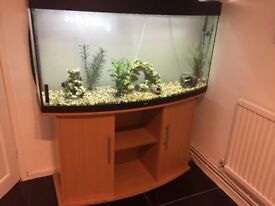 Fish tank, stand and fish with pump and accessories fully working and live fish