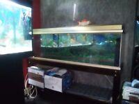 Fish tank 4 ft
