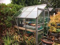 Glass greenhouse 6 x 6