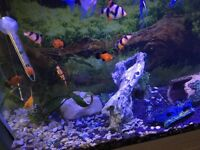 Tropical fish £80(16 fish one giant pleco)