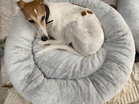 Aldi XL dog bed