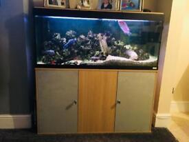 Full Tropical Fish Tank