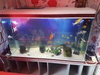 4 feet aquarium fish tank can be used foe reptiles too