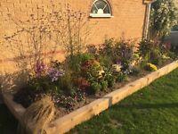 Garden landscaper