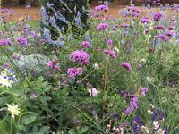 Local plantswoman/organic gardener/planting designer