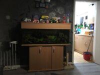 Fish tank set up and fish