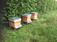 Honey bees ready now