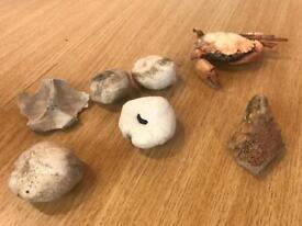 Bones and shells