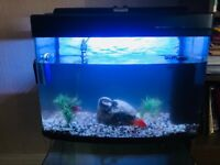 Fish tank, filter, heater, light and fish