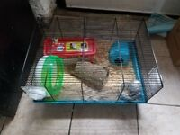 two fancy mice and cage with all extras needed 3 months old