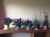 House plants looking for good home