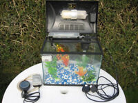 Glass aquarium fish tank with light. Comes with water filtration, aerator pump, gravel and plants