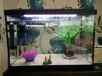 3 Guppies, 70 litre tank with filter and heater