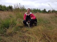 Lead The Way - Dog Walker and Sitter in Aberdeen *Affordable & Reliable*