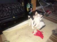 Kittens £30