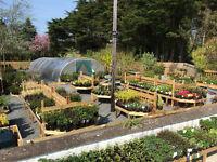 Hedging Plants,Laurel,Griselinia,Beech,Berberis,RedRobin,Privet,Shrubs,Ornamental and Fruit Trees