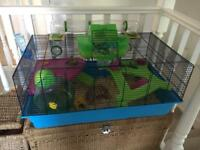 Lovely female Syrian Hamster with cage