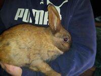 9-10 month old rabbits
