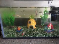 Starter Cold Water Fish Tank for Sale