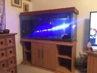 Stunning 4ft fishtank, with all accessories free external filter