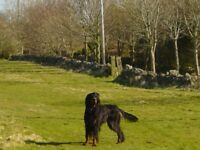 General Dogsbody Dogwalking and Petcare Services