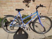Woman's Raleigh Calypso Bike