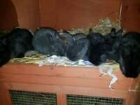 6 baby bunny rabbits