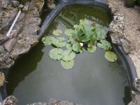 "Kidney shaped rigid fishpond 9""x5"" approx, with York stone edging & rockery.2 pond filters & fish."