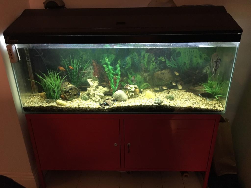 Aquarium fish tank for sale in london - Giant Fish Tank For Sale