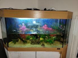 Big Aquarium with fish