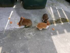 Rabbit babies bunny for sale cheap offer me