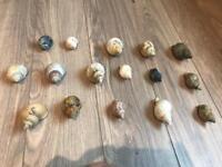 500g hermit crab shells